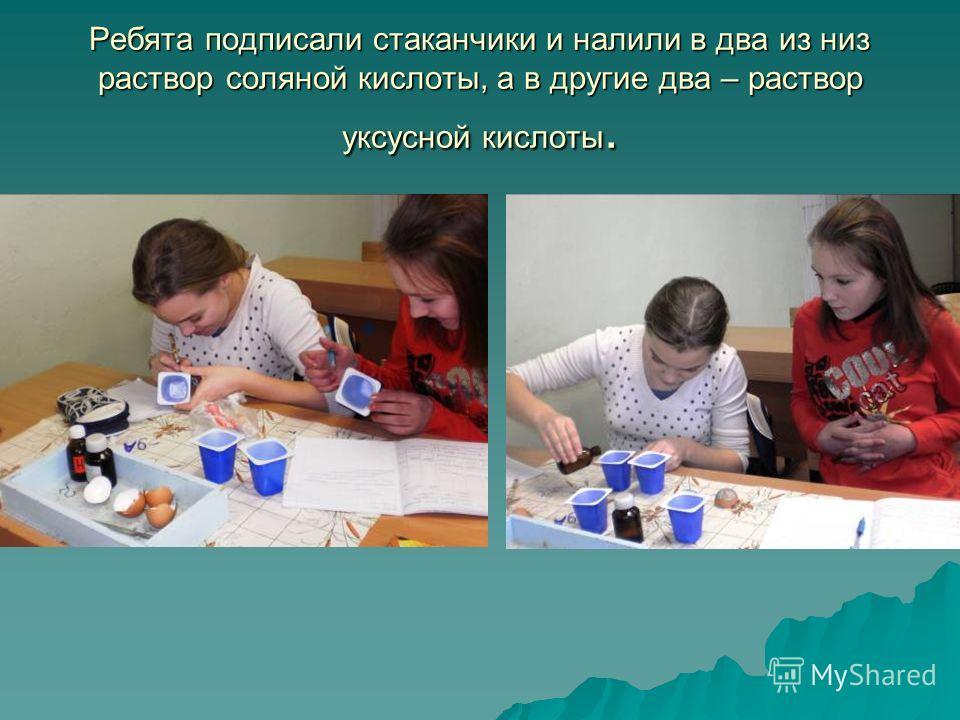 Ребята подписали стаканчики и налили в два из низ раствор соляной кислоты, а в другие два – раствор уксусной кислоты.