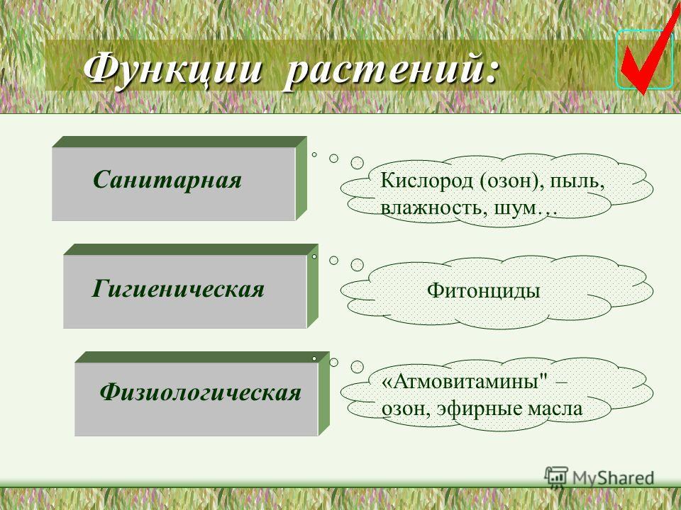 Влияние растений Давно известны фитонцидные свойства хвойных: криптомерия, можжевельник, сосна.