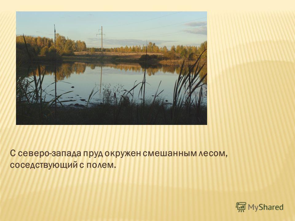 С северо-запада пруд окружен смешанным лесом, соседствующий с полем.