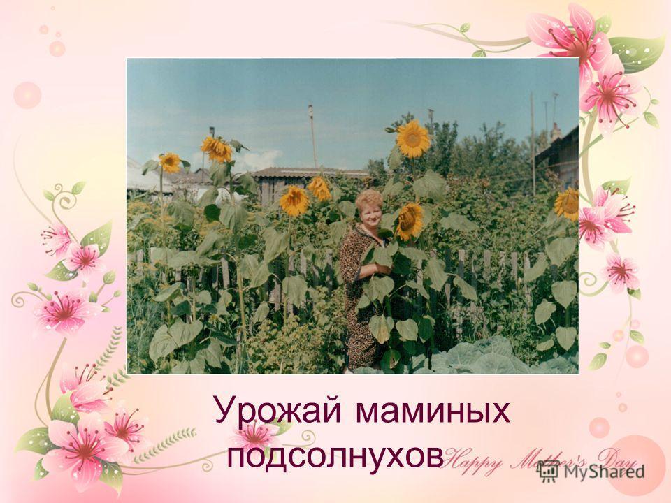 Урожай маминых подсолнухов