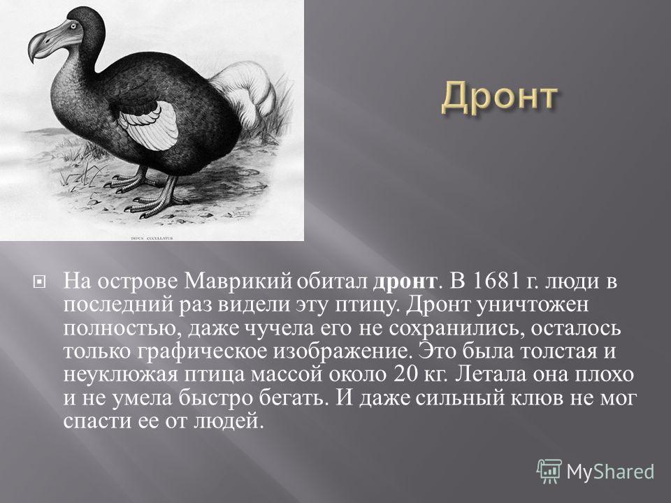 На острове Маврикий обитал дронт. В 1681 г. люди в последний раз видели эту птицу. Дронт уничтожен полностью, даже чучела его не сохранились, осталось только графическое изображение. Это была толстая и неуклюжая птица массой около 20 кг. Летала она п