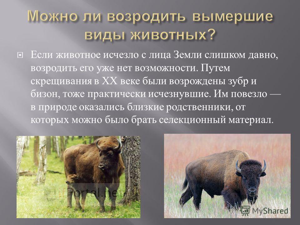 Если животное исчезло с лица Земли слишком давно, возродить его уже нет возможности. Путем скрещивания в ХХ веке были возрождены зубр и бизон, тоже практически исчезнувшие. Им повезло в природе оказались близкие родственники, от которых можно было бр
