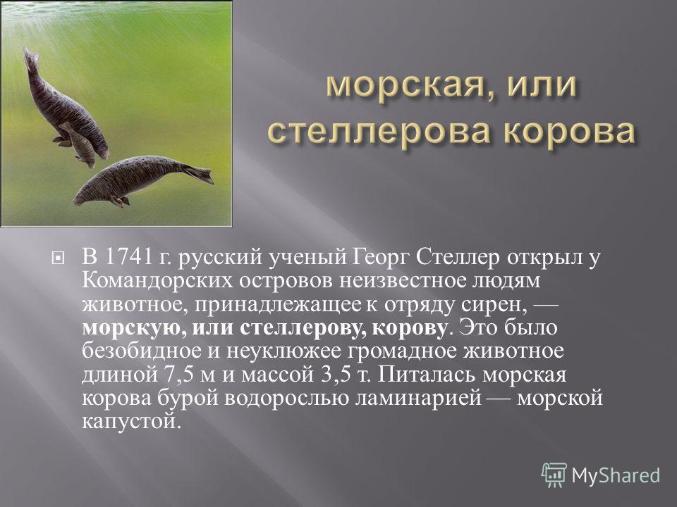 В 1741 г. русский ученый Георг Стеллер открыл у Командорских островов неизвестное людям животное, принадлежащее к отряду сирен, морскую, или стеллерову, корову. Это было безобидное и неуклюжее громадное животное длиной 7,5 м и массой 3,5 т. Питалась