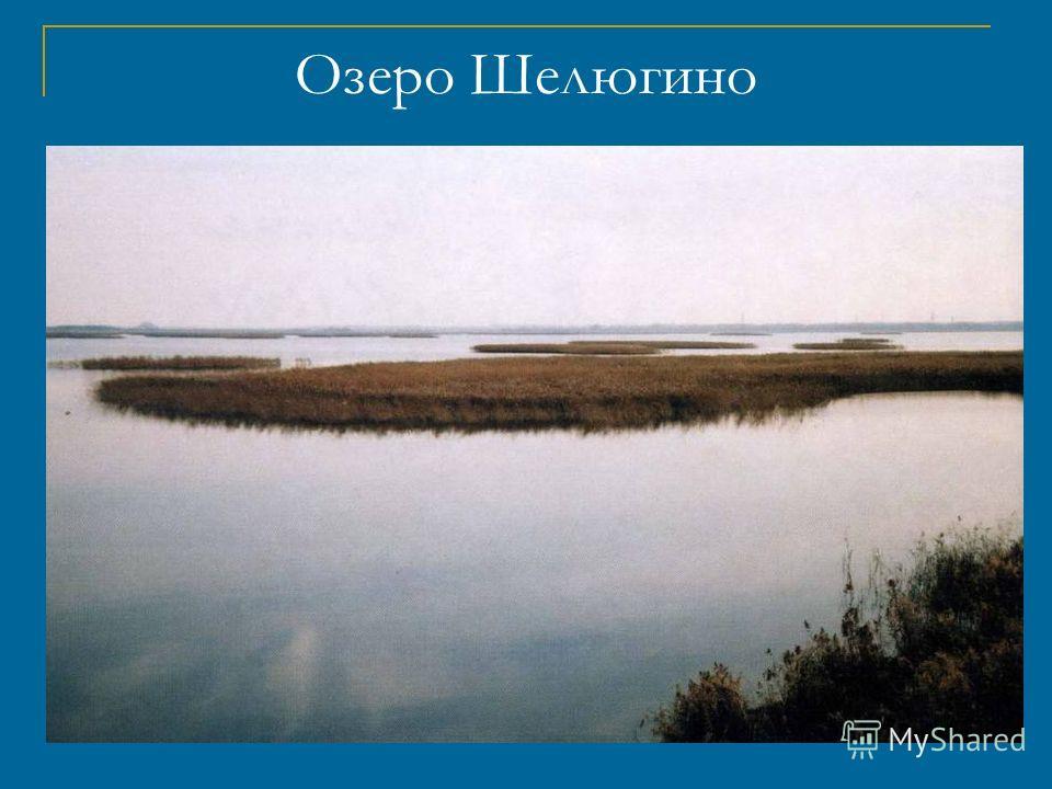 Озеро Смолино Расположено на юго – восточной окраине Челябинска. С трёх сторон его окружают жилые кварталы, зелёные массивы коллективных садов, здравницы. Озеро испытывает огромную антропогенную нагрузку.