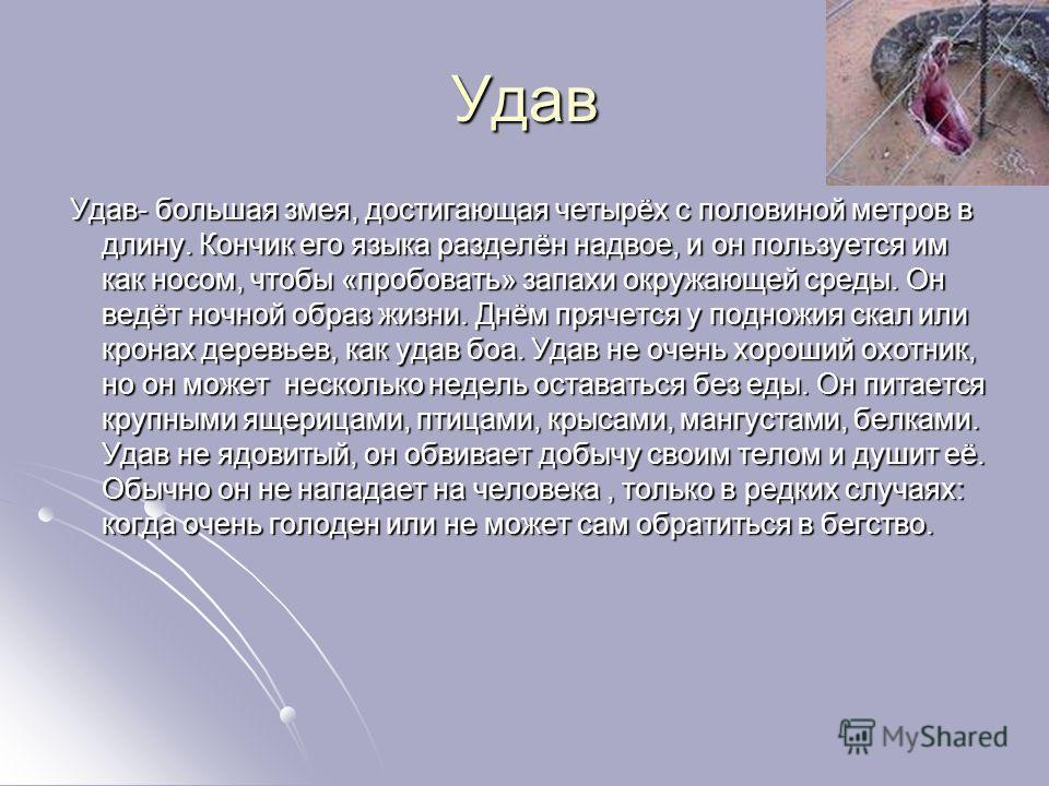 Удав Удав- большая змея, достигающая четырёх с половиной метров в длину. Кончик его языка разделён надвое, и он пользуется им как носом, чтобы «пробовать» запахи окружающей среды. Он ведёт ночной образ жизни. Днём прячется у подножия скал или кронах