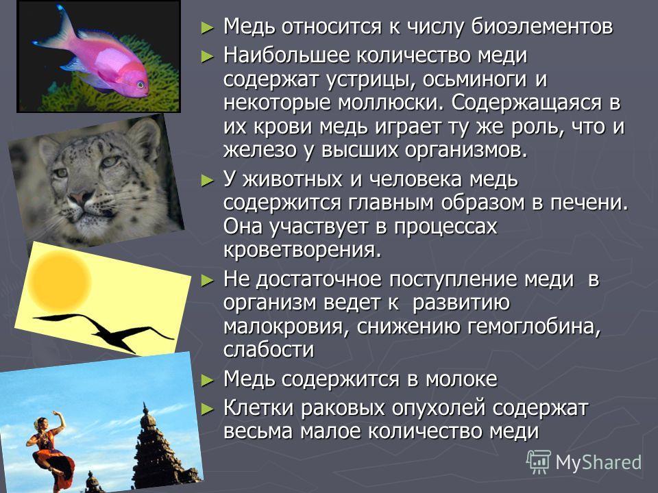 Медь относится к числу биоэлементов Наибольшее количество меди содержат устрицы, осьминоги и некоторые моллюски. Содержащаяся в их крови медь играет ту же роль, что и железо у высших организмов. У животных и человека медь содержится главным образом в