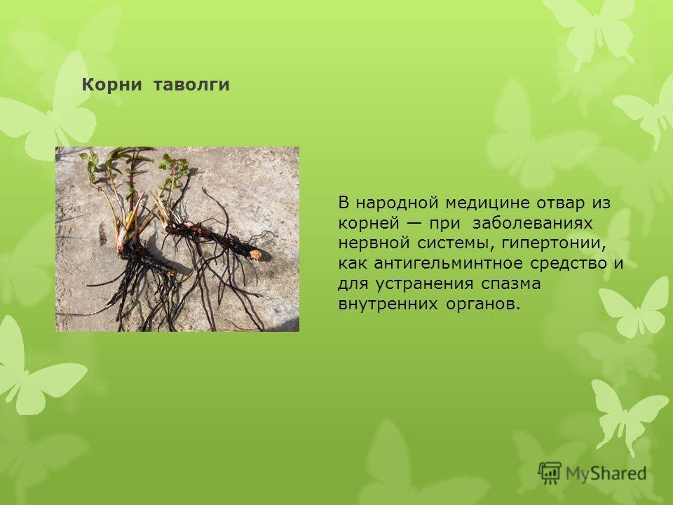 Корни таволги В народной медицине отвар из корней при заболеваниях нервной системы, гипертонии, как антигельминтное средство и для устранения спазма внутренних органов.