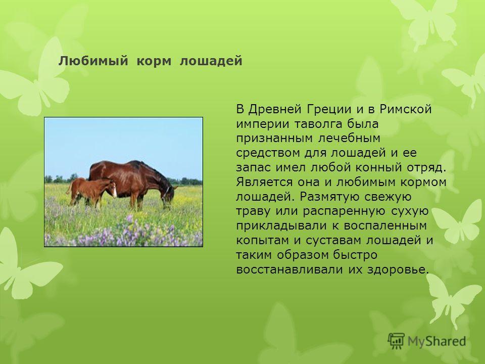 Любимый корм лошадей В Древней Греции и в Римской империи таволга была признанным лечебным средством для лошадей и ее запас имел любой конный отряд. Является она и любимым кормом лошадей. Размятую свежую траву или распаренную сухую прикладывали к