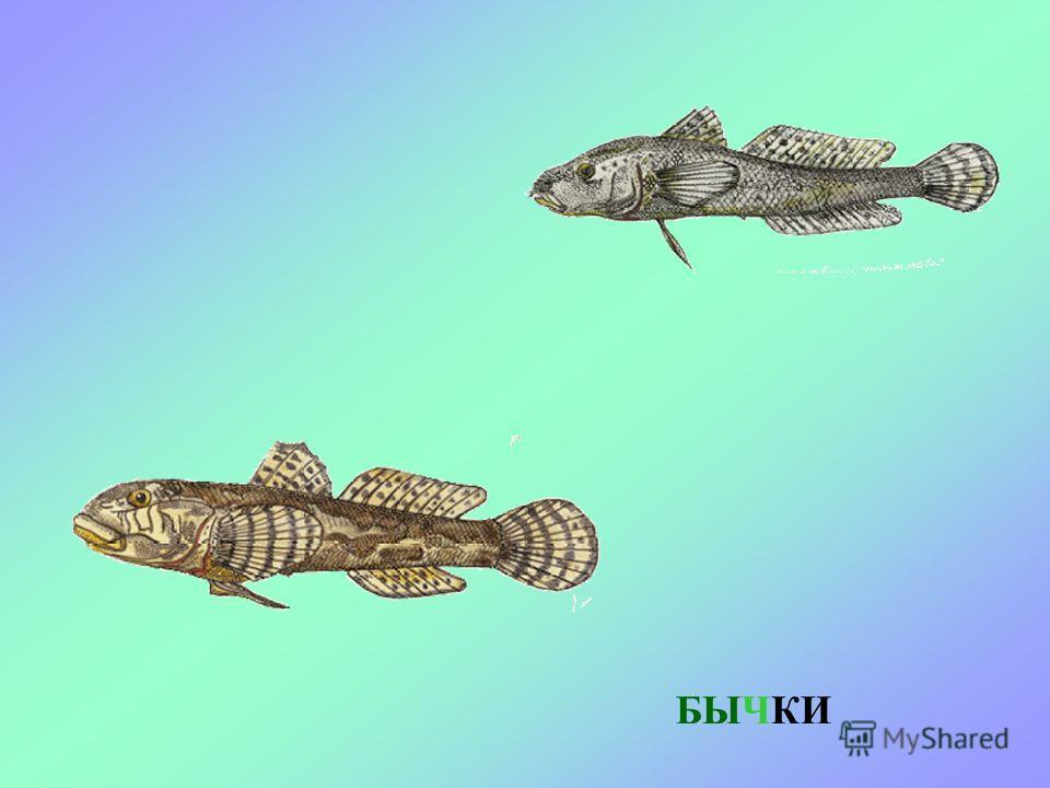 Стая маленьких рыбок