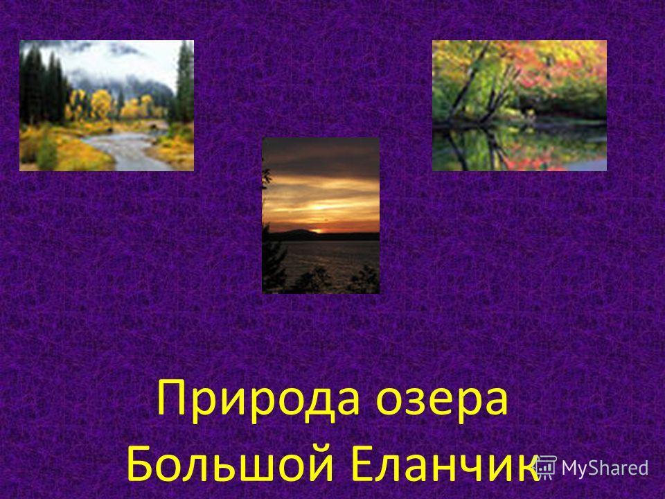 Природа озера Большой Еланчик