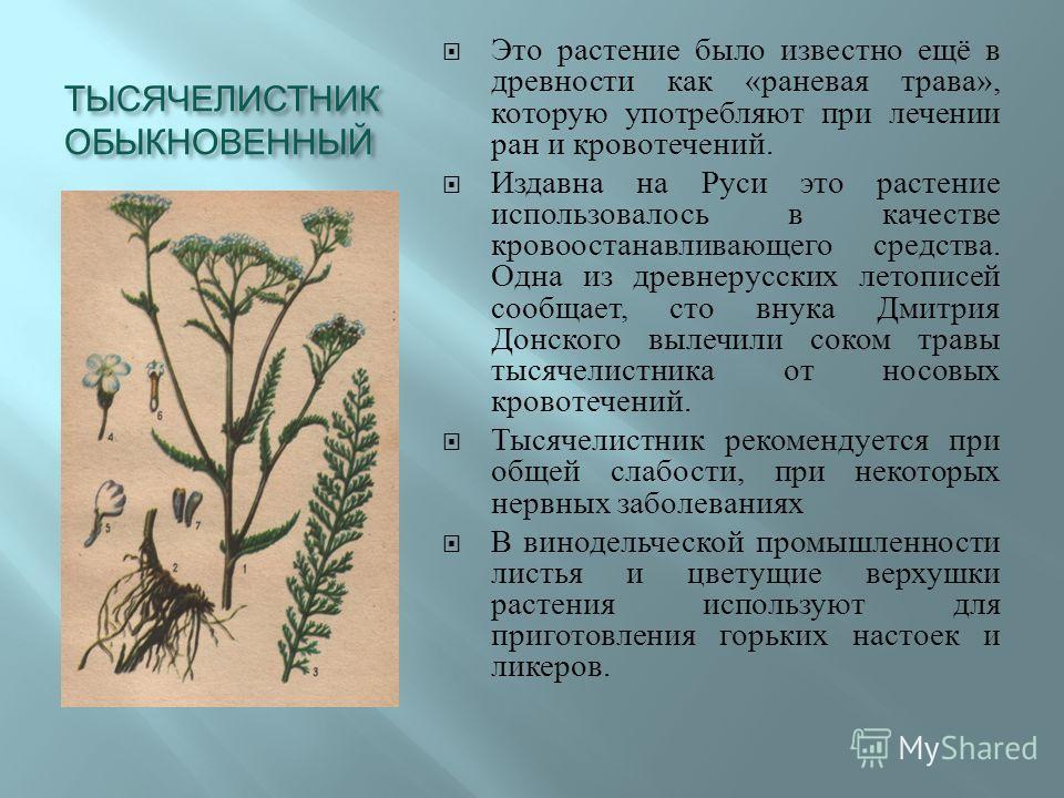 ТЫСЯЧЕЛИСТНИК ОБЫКНОВЕННЫЙ Это растение было известно ещё в древности как « раневая трава », которую употребляют при лечении ран и кровотечений. Издавна на Руси это растение использовалось в качестве кровоостанавливающего средства. Одна из древнерусс