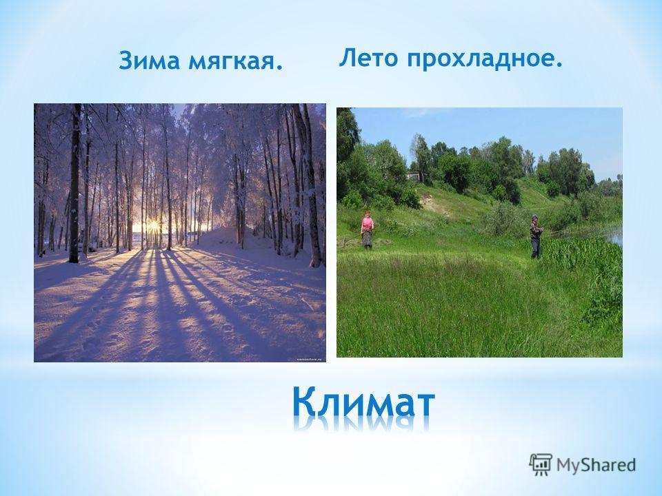 Зима мягкая. Лето прохладное.