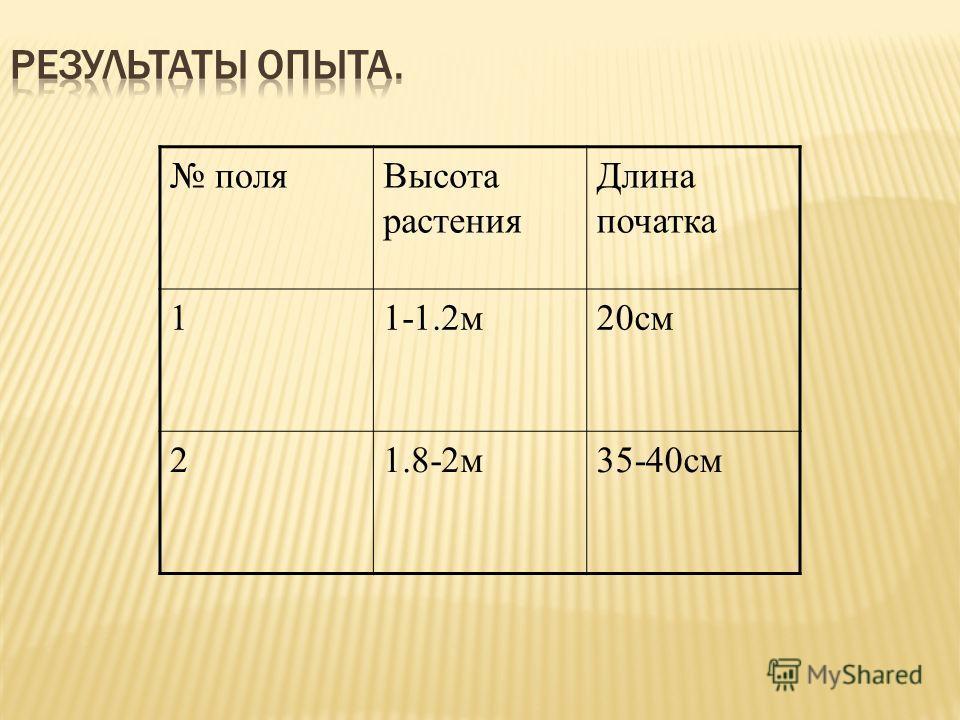 поляВысота растения Длина початка 11-1.2м20см 21.8-2м35-40см