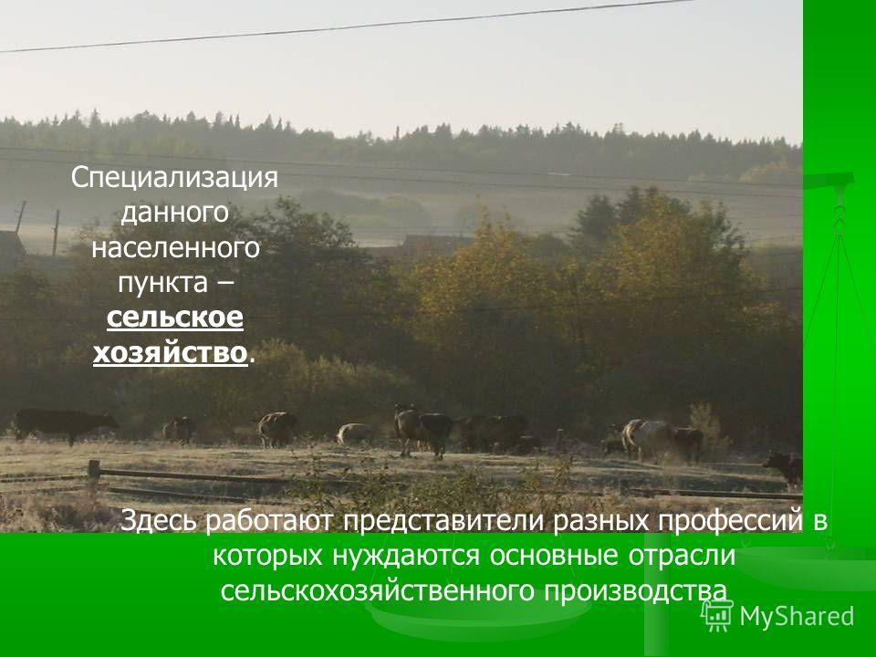 Специализация данного населенного пункта – сельское хозяйство. Здесь работают представители разных профессий в которых нуждаются основные отрасли сельскохозяйственного производства