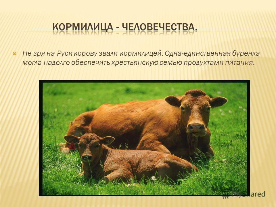 Не зря на Руси корову звали кормилицей. Одна-единственная буренка могла надолго обеспечить крестьянскую семью продуктами питания.