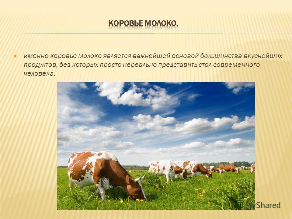 именно коровье молоко является важнейшей основой большинства вкуснейших продуктов, без которых просто нереально представить стол современного человека.