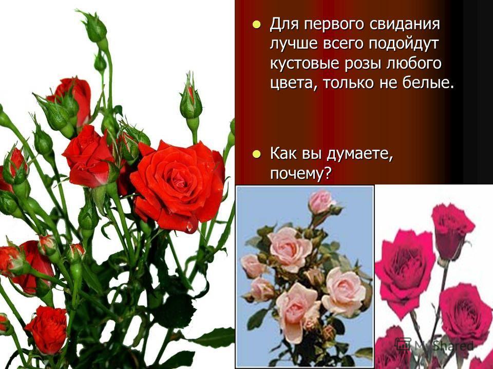 Для первого свидания лучше всего подойдут кустовые розы любого цвета, только не белые. Для первого свидания лучше всего подойдут кустовые розы любого цвета, только не белые. Как вы думаете, почему? Как вы думаете, почему?