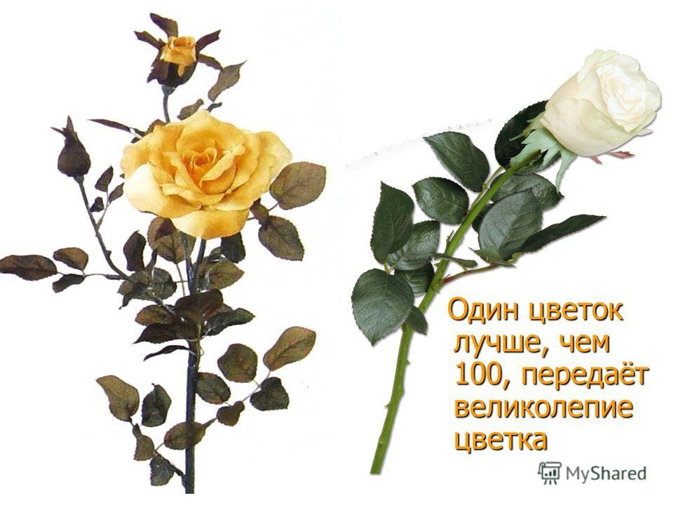 Один цветок лучше, чем 100, передаёт великолепие цветка Один цветок лучше, чем 100, передаёт великолепие цветка