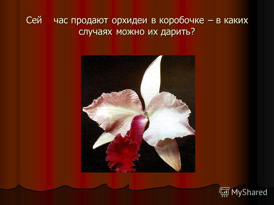 Сейчас продают орхидеи в коробочке – в каких случаях можно их дарить?