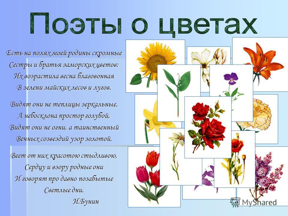 Есть на полях моей родины скромные Сестры и братья заморских цветов: Их возрастила весна благовонная В зелени майских лесов и лугов. Видят они не теплицы зеркальные, А небосклона простор голубой, Видят они не огни, а таинственный Вечных созвездий узо