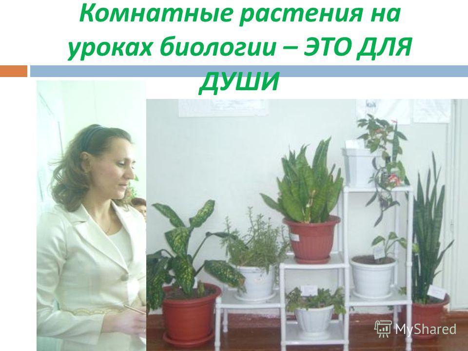 Комнатные растения на уроках биологии – ЭТО ДЛЯ ДУШИ