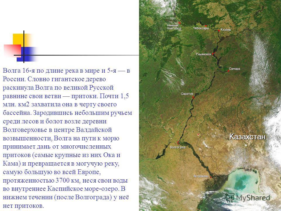 Волга 16-я по длине река в мире и 5-я в России. Словно гигантское дерево раскинула Волга по великой Русской равнине свои ветви притоки. Почти 1,5 млн. км2 захватила она в черту своего бассейна. Зародившись небольшим ручьем среди лесов и болот возле д