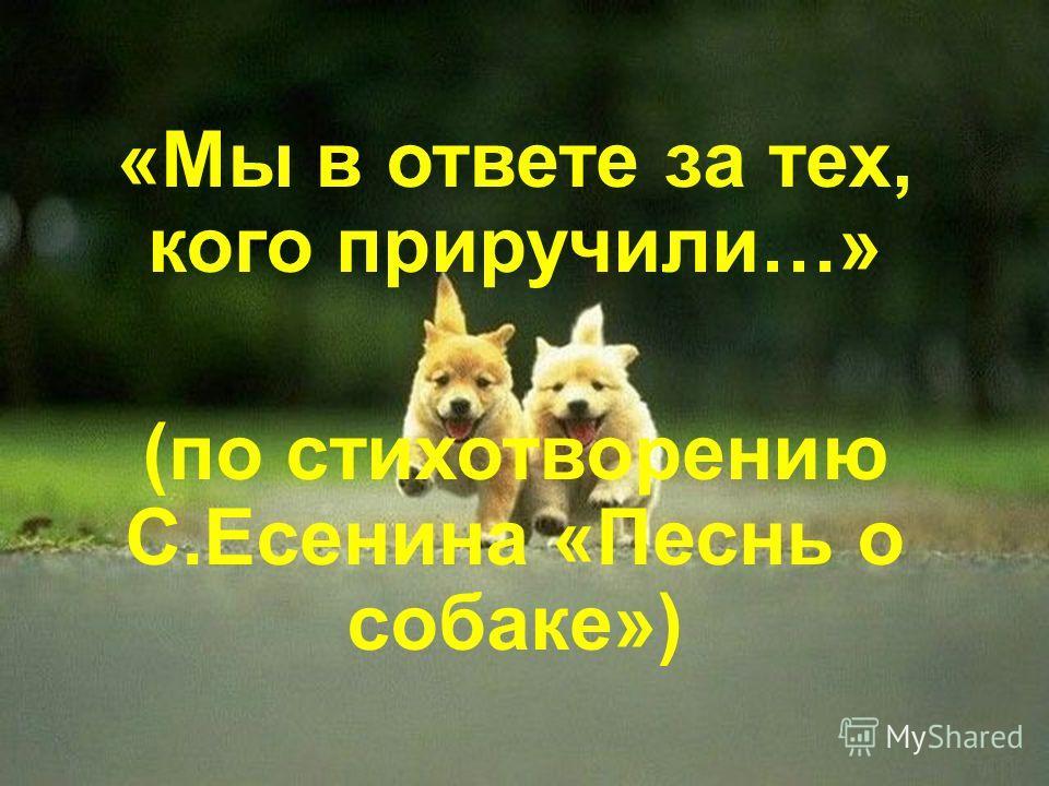 «Мы в ответе за тех, кого приручили…» (по стихотворению С.Есенина «Песнь о собаке»)