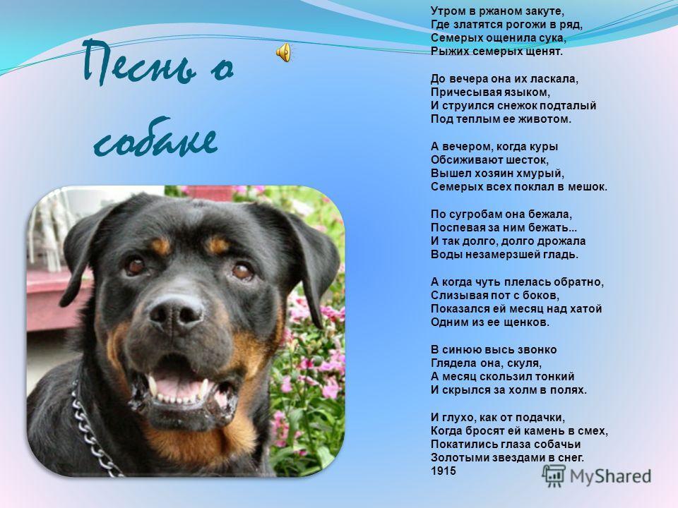 Эссе стихотворения есенина песнь о собаке 6460
