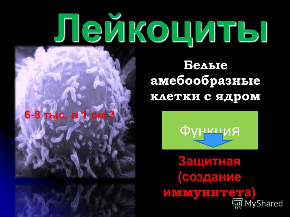 Лейкоциты Лейкоциты Белые амебообразные клетки с ядром Функци я Защитная (создание и ммунитет а) 6-8 тыс. в 1 см 3