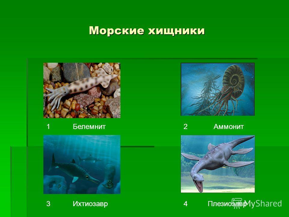 Морские хищники 12 34 БелемнитАммонит ИхтиозаврПлезиозавр