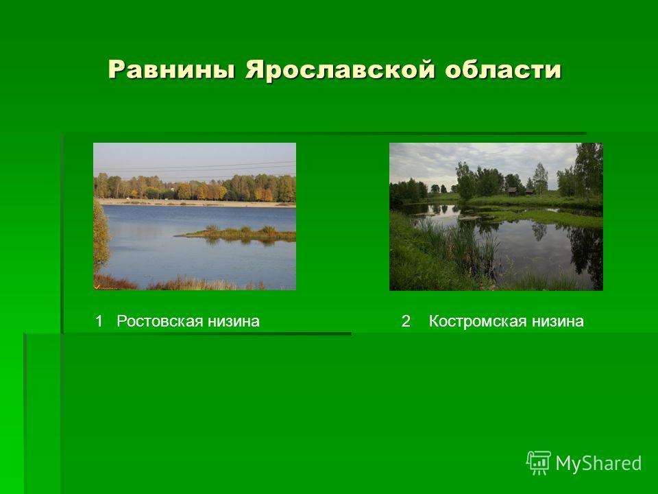 Равнины Ярославской области 12Ростовская низинаКостромская низина