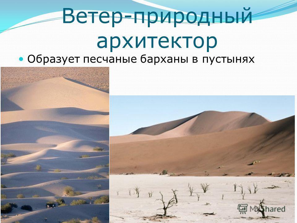 Ветер-природный архитектор Образует песчаные барханы в пустынях
