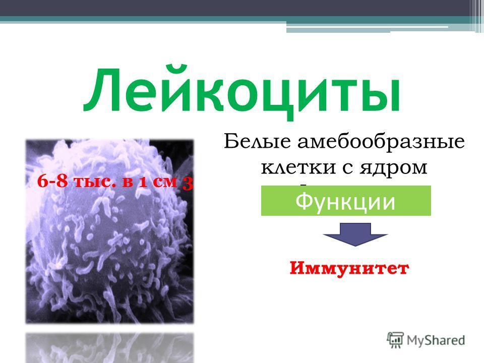 Лейкоциты Белые амебообразные клетки с ядром Функции Иммунитет 6-8 тыс. в 1 см 3