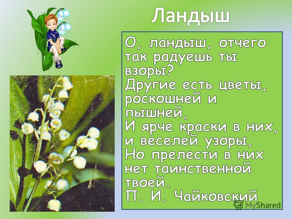 По славянской легенде водяная царица увидела возлюбленного с другой. Из ее прекрасных глаз покатились слезы.Потом эти слезы превращались в нежные цветы, унизанные волшебными жемчужинами. С тех пор этот цветок считается символом чистой и нежной любви.