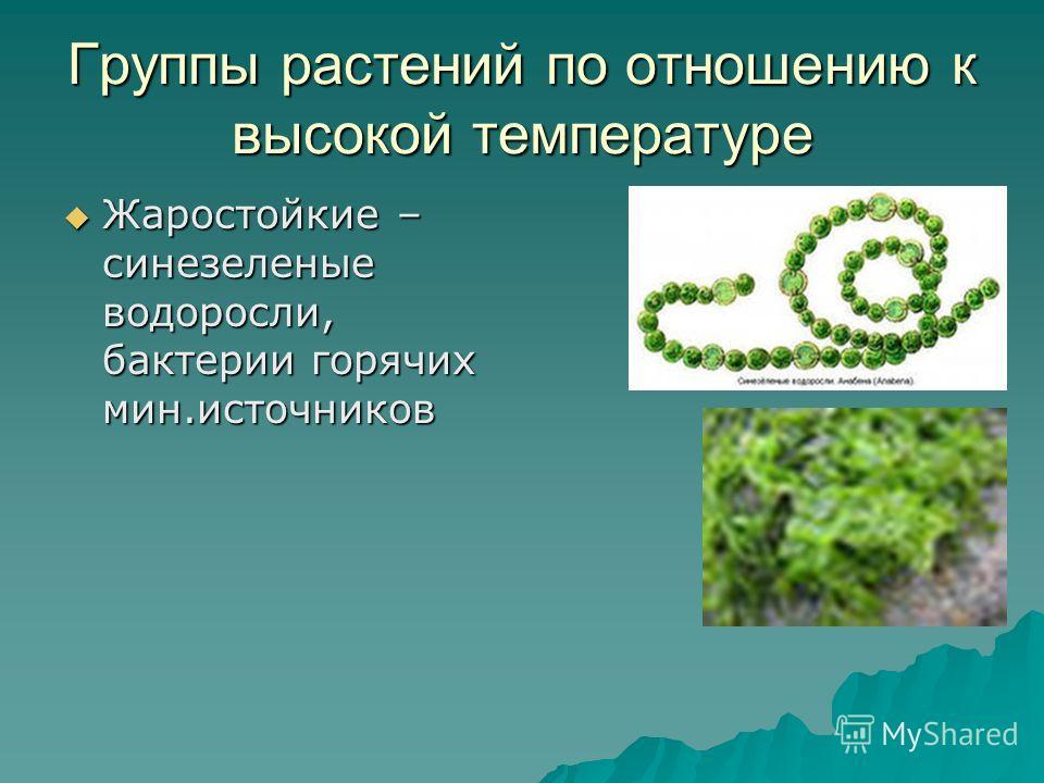 Группы растений по отношению к высокой температуре Жаростойкие – синезеленые водоросли, бактерии горячих мин.источников Жаростойкие – синезеленые водоросли, бактерии горячих мин.источников