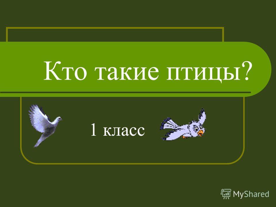 Кто такие птицы? 1 класс