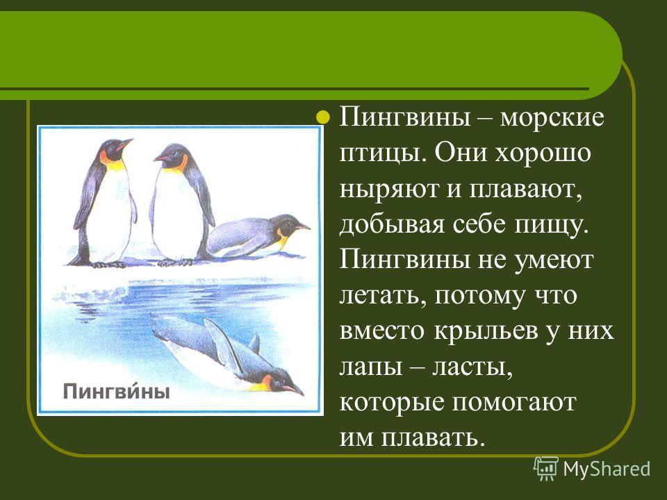 Пингвины – морские птицы. Они хорошо ныряют и плавают, добывая себе пищу. Пингвины не умеют летать, потому что вместо крыльев у них лапы – ласты, которые помогают им плавать.