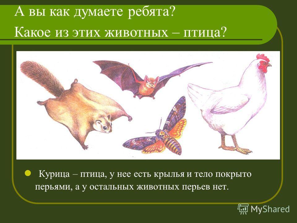 Курица – птица, у нее есть крылья и тело покрыто перьями, а у остальных животных перьев нет. Какое из этих животных – птица? А вы как думаете ребята?