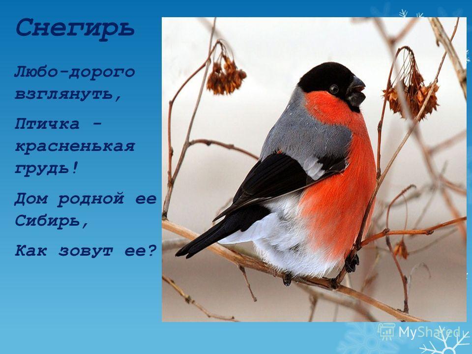 Галка Птица родственник вороны, Ест червей как макароны, Крики стаи- перепалка, А зовётся птица-..