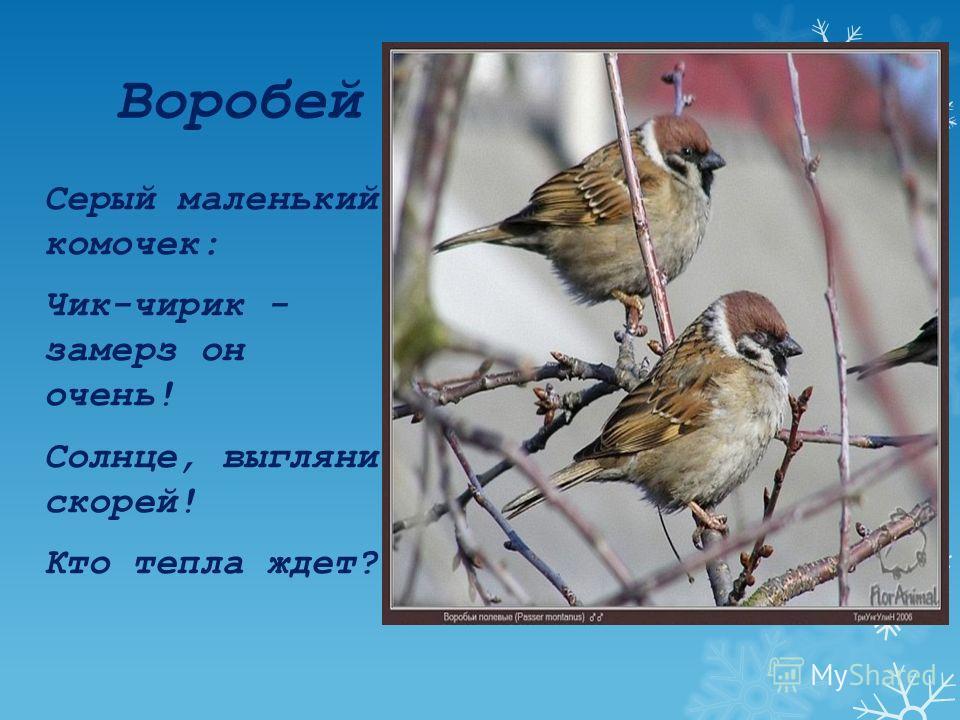 Цели: 1)систематизировать и обогатить знания о зимующих птицах; 2)развивать мышление детей; 3)воспитывать у детей любовь к природе, заботу о птицах и бережное отношение к ним.