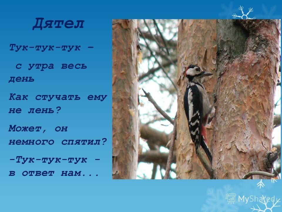 Синица И зимой ей не сидится: Над моим окном кружится, Хлебных крошек и пшеницы Просит к завтраку...