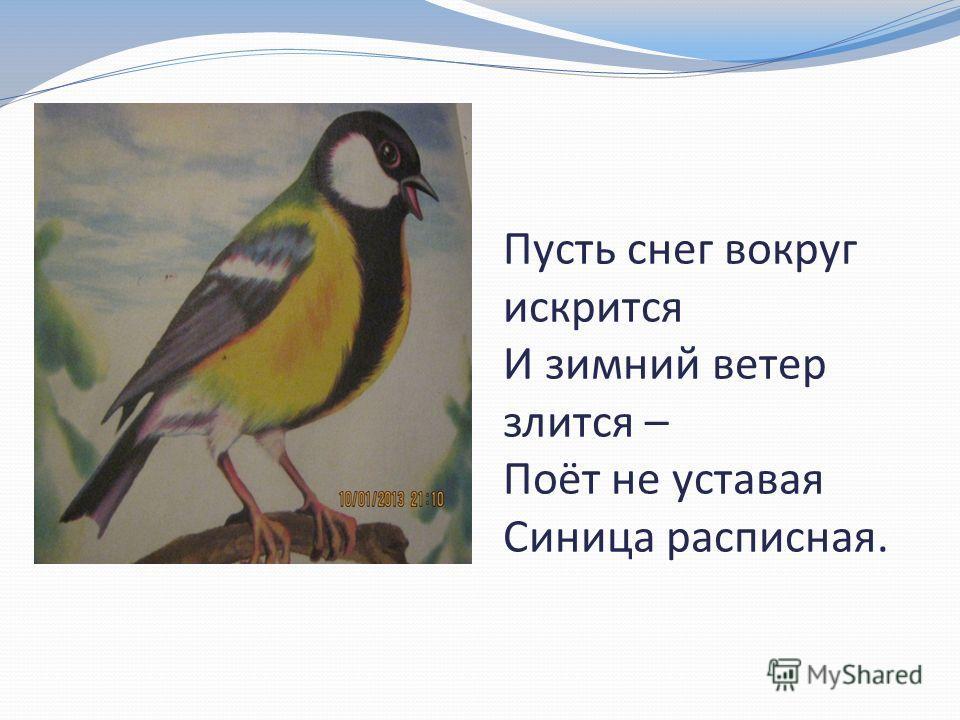Пусть снег вокруг искрится И зимний ветер злится – Поёт не уставая Синица расписная.