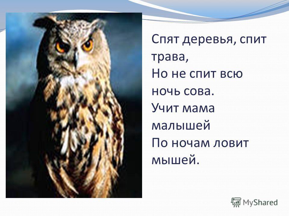 Спят деревья, спит трава, Но не спит всю ночь сова. Учит мама малышей По ночам ловит мышей.