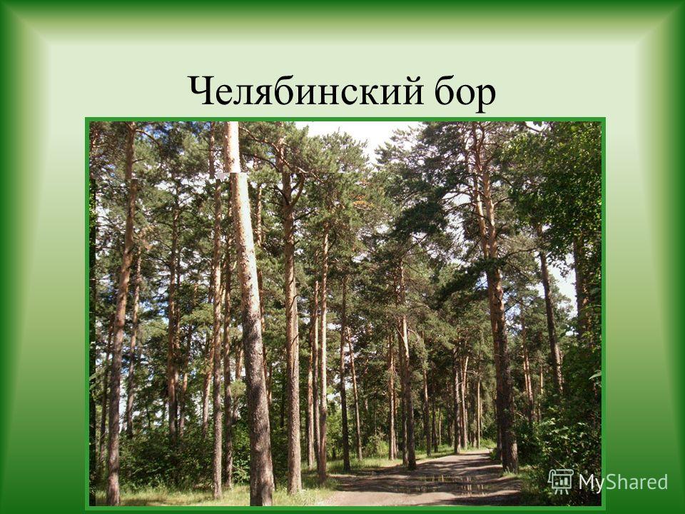Челябинский бор