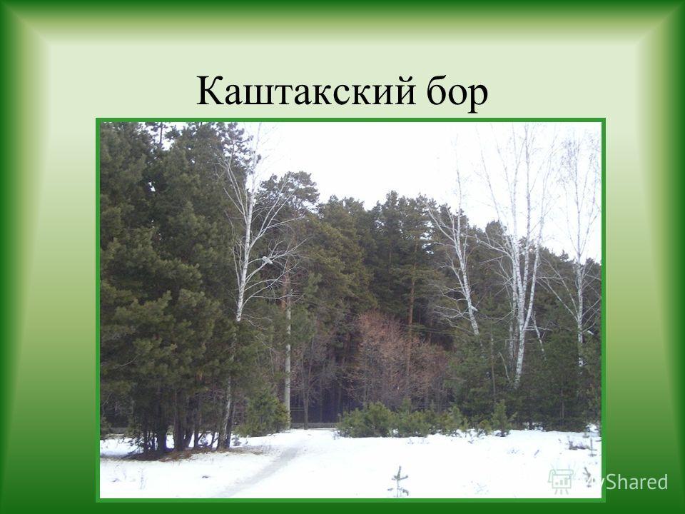 Каштакский бор