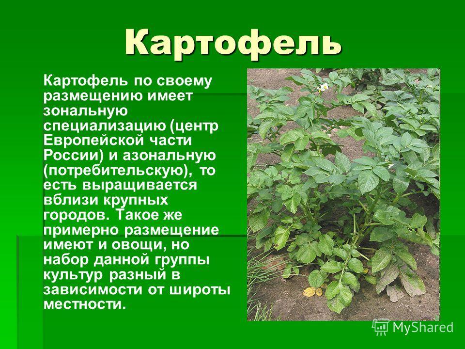 Картофель Картофель по своему размещению имеет зональную специализацию (центр Европейской части России) и азональную (потребительскую), то есть выращивается вблизи крупных городов. Такое же примерно размещение имеют и овощи, но набор данной группы ку