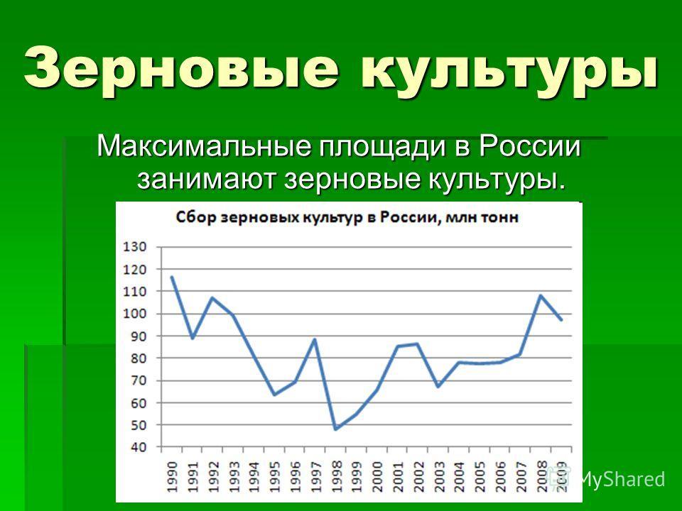 Зерновые культуры Максимальные площади в России занимают зерновые культуры.