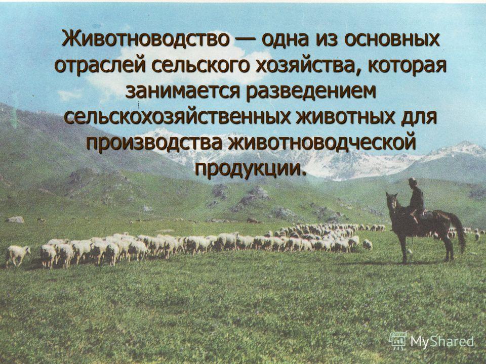 Животноводство одна из основных отраслей сельского хозяйства, которая занимается разведением сельскохозяйственных животных для производства животноводческой продукции.