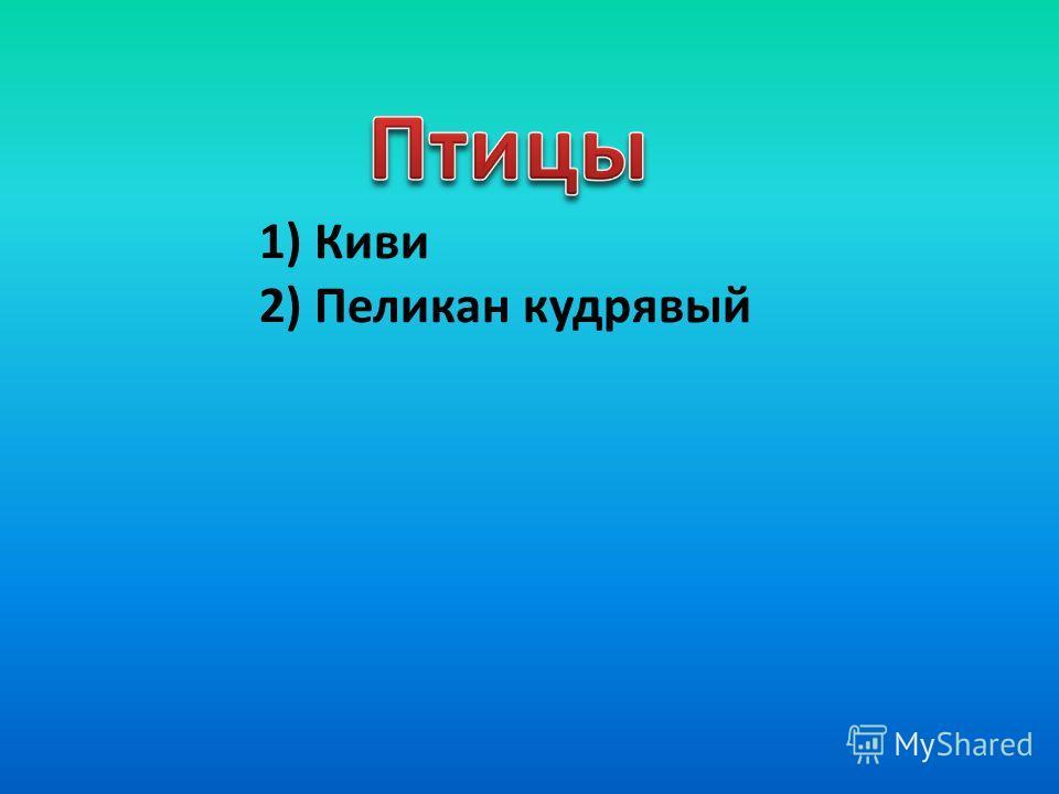 1) Киви 2) Пеликан кудрявый