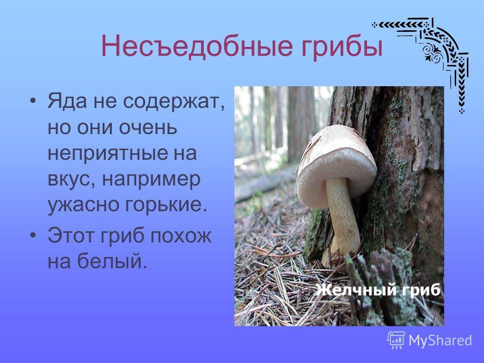 Несъедобные грибы Яда не содержат, но они очень неприятные на вкус, например ужасно горькие. Этот гриб похож на белый. Желчный гриб